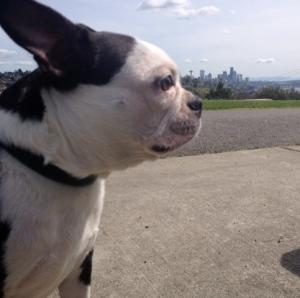 Luna, A Seattle Pup